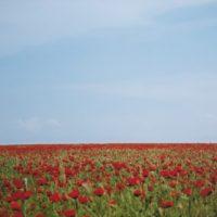 沙伊德.阿塔貝可,Korpeshe 旗 #6,2011,數位輸出,67 x 100 cm 6 Ed. + 1 AP