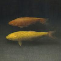 葉子奇,雙魚II,2002-2013,卵彩・油畫/亞麻布,76.5 x 102 cm