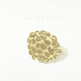王玉平,釋迦,2013.1.3,2013,水彩/紙,23 × 31 cm