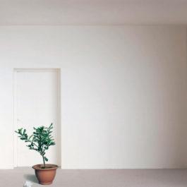 王雅慧,日光下的靜物,2005,錄影裝置,4分36秒循環播放